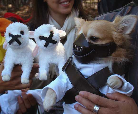 Karate Kid Movie Costume Dogs in Movie-Themed H...